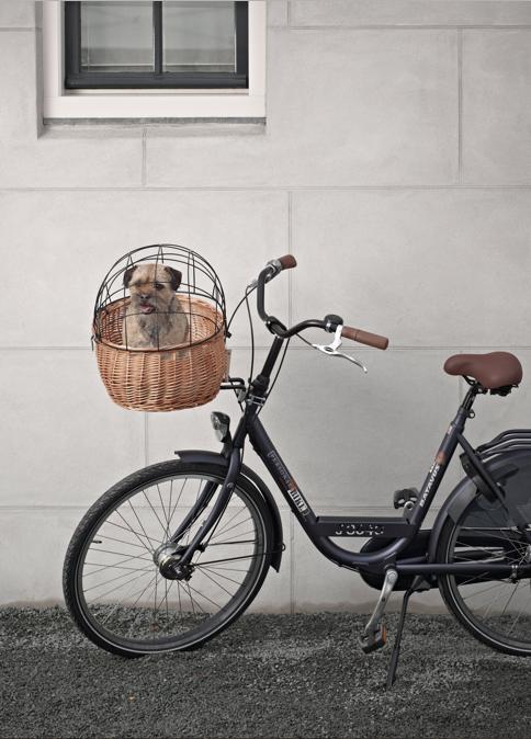 panier v lo avant animaux basil pluto sur mes v los hollandais. Black Bedroom Furniture Sets. Home Design Ideas